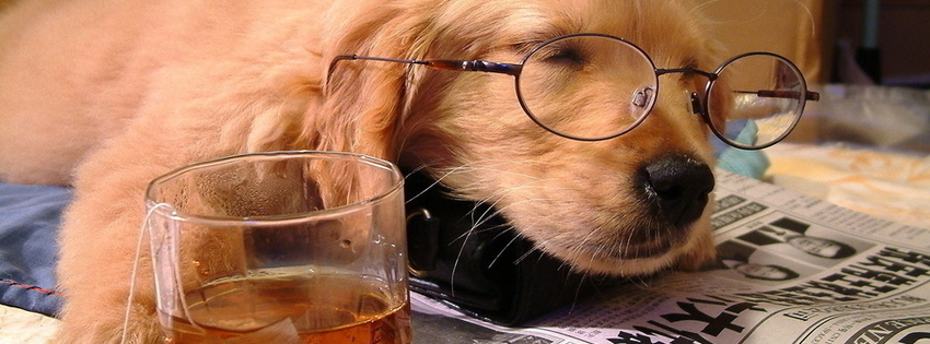 Dog and whisky