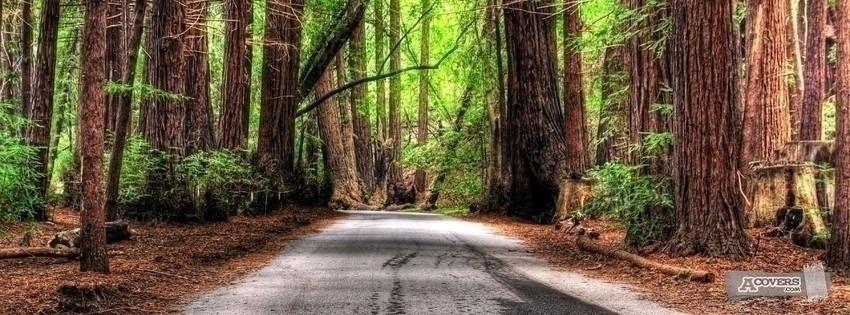 Calm road